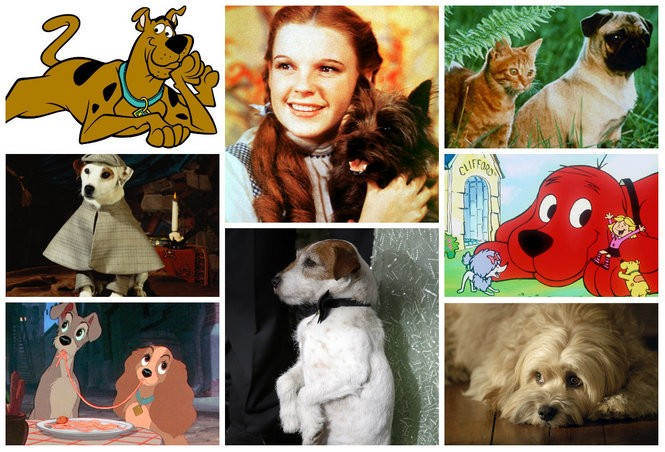 27 Beloved Dogs From Tv Shows And Movies Cutest Dogs Contest 2016