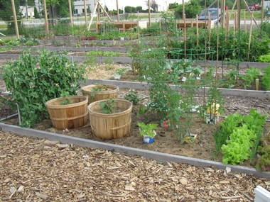 The Greene Acres Community Garden in Broadview Heights has returned for a new and improved season.