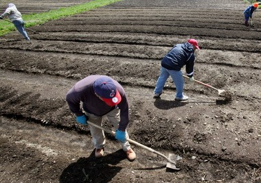 Workers for Refugee Response prepare the Ohio City Farm for seed and planting in April 2013.