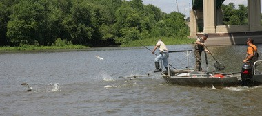 A crew of fisheries biologists from the Illinois Department of Natural Resources use electro shock equipment to encourage silver carp in the Illinois River at Lacon, Ill. to jump and be netted.