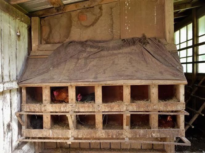 Strnad chicken coop