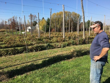 Mike Napier surveys hop plants he and his wife Jenny cultivate.