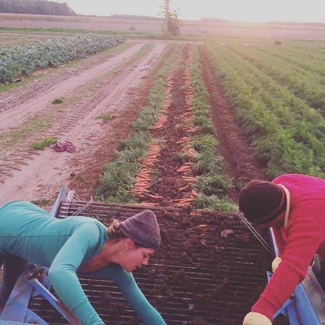 Farm Fare coordinates transportation in a way that can cut food waste, promote sustainability, put more truck drivers to work and give chefs and farmers more time to focus on what they do best.