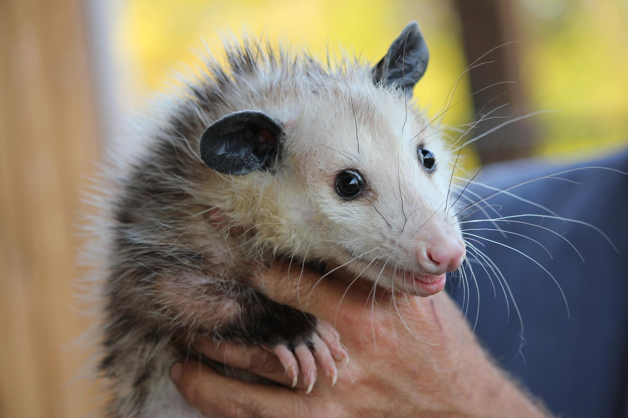So What Happened To The Browns Rally Possum Cleveland Com