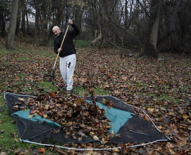 Raking leaves onto a tarp is a fast method for fall lawn clean-up, and much quieter than a leaf vacuum.