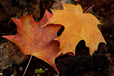 Fall leaves are beautiful, but too many left on your lawn over the winter can kill grass.