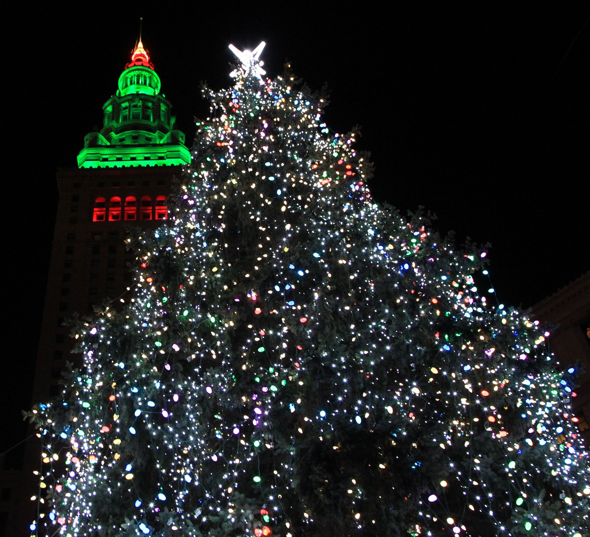 Send Us Photos Of Your Best Dressed Christmas Tree Of 2013