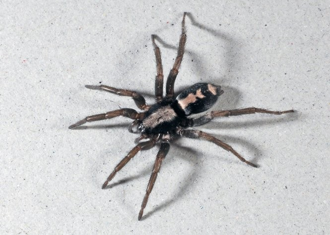 House spiders of Ohio: Seen these lately? - cleveland com