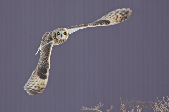 Ohio birds of prey: From eagles to owls, falcons to hawks