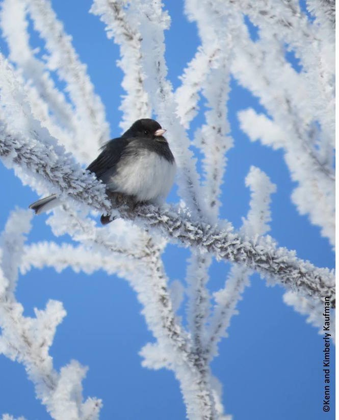 How to identify 20 winter backyard birds at your feeders