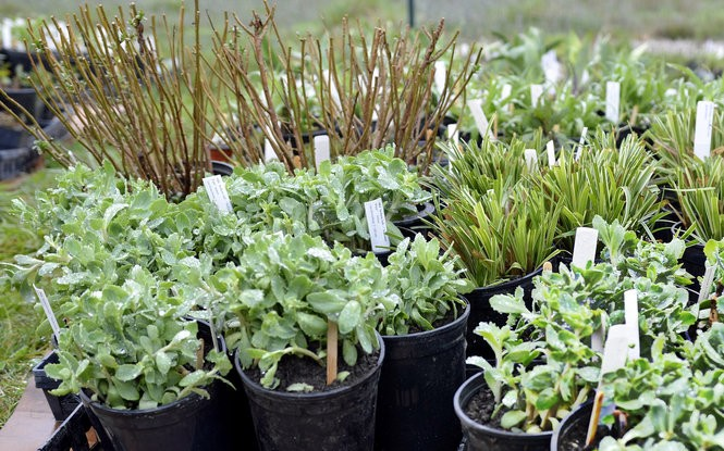 Plants for all seasons and yard locations are ready for the sale.