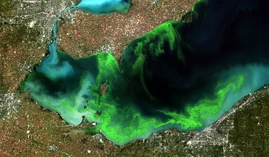 A satellite image of western Lake Erie in 2011 showed the extent of a harmful blue-green algal bloom. The threat this year is still being assessed, but the good news is that farmers and scientists are collaborating to find ways to reduce the farm runoff that contributes to the problem.