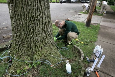 Eric Bristol, marketing manager of Arborjet, inspects the injection equipment connected to one of 38 ash trees along West 50 Street in Cleveland that are being treated to prevent damage by emerald ash borers.