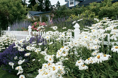 "For the sanctuary garden, blend fragrant plants and soothing color palettes. Your plant choices become ""healers, aromatherapy and sensory stimulators,"" according to gardener and author Sue Goetz."