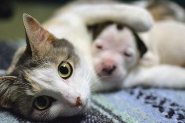 Lurlene nurtured Noland as he outgrew her four kittens.