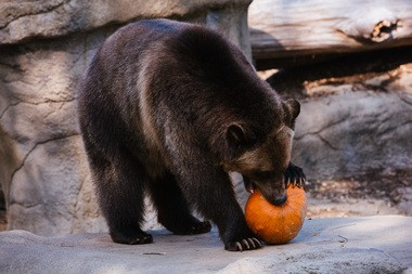 Cleveland Metroparks Zoo's Boo at the Zoo is back