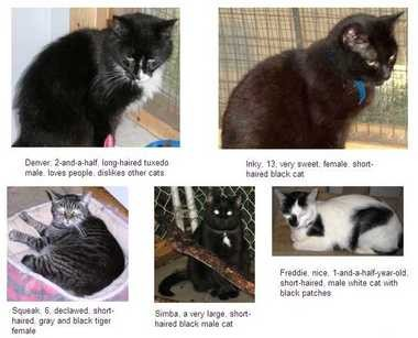 Happy Tails Cat Sanctuary offers these cats for adoption.