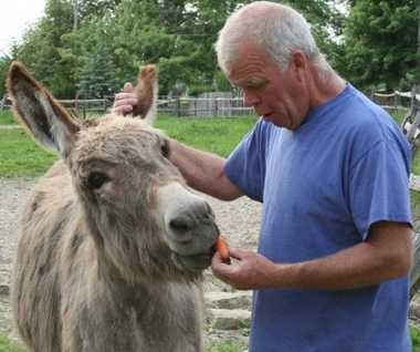 Tim Corrigan cares for a wild burro named Bernie, short for San Bernadino, Ca., where the Bureau of Land Management caught him, then offered him for adoption.