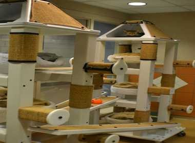 The number of dogs and cats euthanized at the Cleveland Animal Protective League has dropped from 13,874 in 2000 to 1,967 last year, an 86 percent decrease. Cats waiting for adoption get exercise in this playroom.