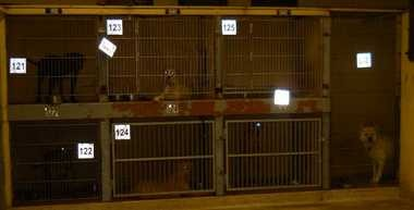 More than 1,000 dogs were euthanized last year at the Cleveland Kennel, which took in more than 4,300 animals.