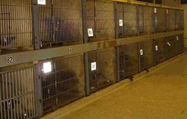 Cleveland city officials are searching for a site on which to build a new Cleveland Kennel. Until then, dogs must stay in these dreary cages at the old kennel in Tremont.