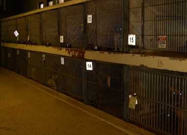 Compare the cages and rooms at the Cleveland APL, renovated in 2004 (above photo), to this, the main dog room at the Cleveland Kennel, which is 36 years old.