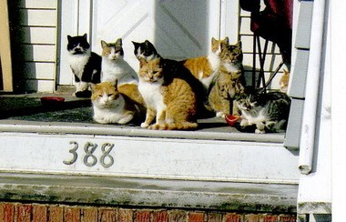These feral cats are fed by volunteers in Cleveland's North Collinwood neighborhood.