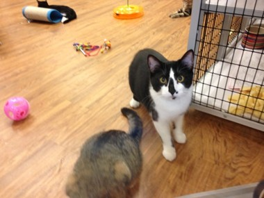 Vaccinated, neutered kittens are $75 to $90, cats are $60 at Kitten Krazy, 930 Lafayette Road, Medina, from 10 a.m. to 3 p.m. Monday through Saturday. Kitten Krazy takes in some of the cats that land at the county dog shelter.