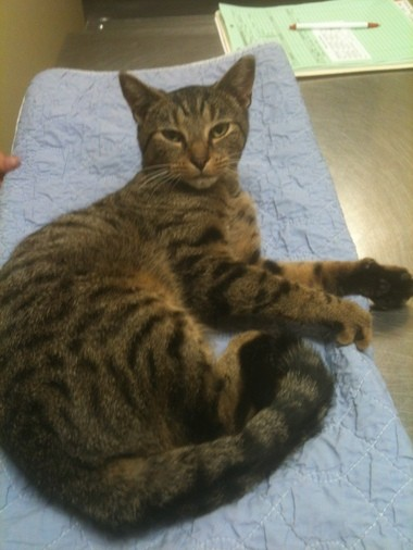 Hammy was a stray kitten who was hit by a car. Waterloo Alley Cat volunteers are asking for donations for his veterinary bills.