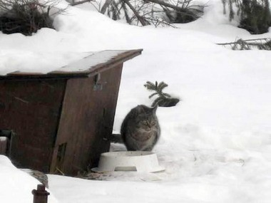 Feral cats need shelter.