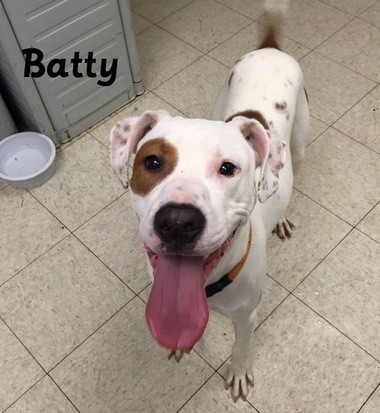 Batty is neutered, vaccinated and available for $61 at the Cleveland Kennel.
