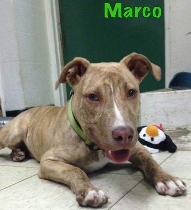 Marco needs a home.
