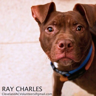 Ray Charles is ready for a home.