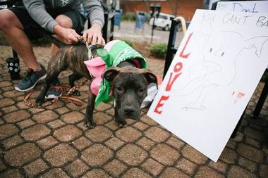 Darwin Dogs hosts a Bandanas for Banned Breeds parade and party Saturday, May 9, to protest Lakewood's pit bull ban.