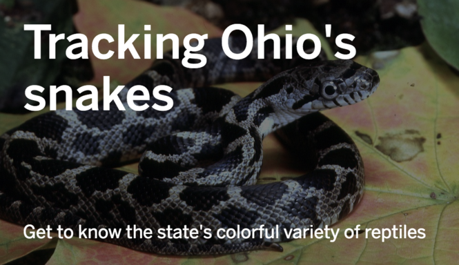 Snakes of Ohio: Identifying all 25 species (slideshow) - cleveland com