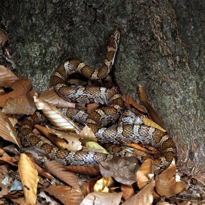 Snakes of Ohio: Identifying all 25 species (slideshow