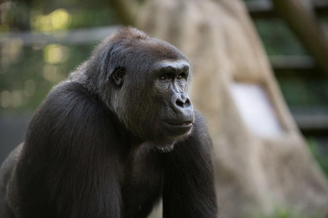 Kebi Moyo from Columbus (Grahm S. Jones, Columbus Zoo)