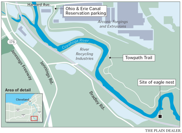 The new bald eagle nest can be viewed from the Ohio & Erie Canal Towpath, about one mile south of the Harvard Road Traihead parking area, near a large power line base. The nest is on the opposite - west - bank of the river and until trees leaf out in the spring, trail users have a good view of the nest and eagle activity.