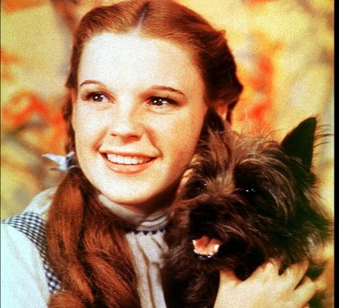 Judy Garland's repeated bouts with adversity have made her a sweetheart in the LGBT community.