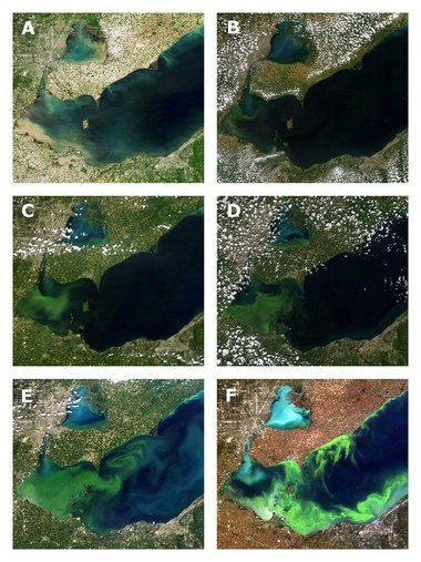 This sequence of satellite photos of Lake Erie's western basin shows the progress of the 2011 algae bloom. A: June 1, soon after a surge of fertilizer-loaded storm runoff from the Maumee River has flowed into the lake basin; B: July 19, as the bloom begins to grow; C: July 31, about two weeks after the bloom's start; D: August 11, as the bloom spreads east toward the central basin; E: Sept. 3, as the bloom reaches the central basin and a second phase forms on the basin's north shore; F: Oct. 9, as the bloom begins to decline in the western basin.