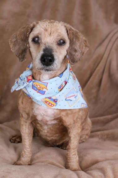 Charming Charlie is one of the rescued dogs now available for adoption at Forget Me Not Animal Rescue.