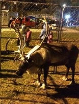 Santa's reindeer are rested and ready for their journey on Christmas Eve.