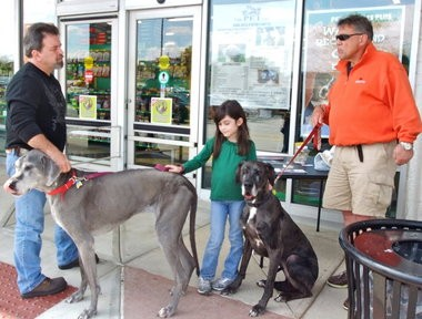 Great Danes Madigan and Tilly stand with their owner Doug Hall in front of Pets Supplies Plus in Westlake. They volunteer one Saturday a month to raise awareness for Harlequin Haven Great Dane Rescue.