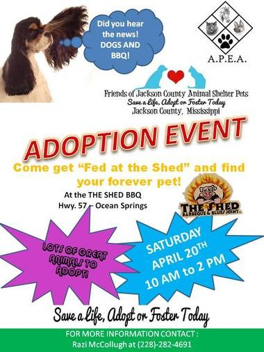 Pet adoption to be held at The Shed on Saturday - gulflive com