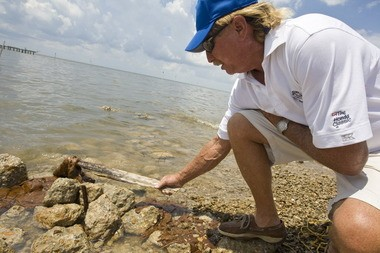 BD Root, of the Jackson County Recreation Department, looks at the globs of oil that washed up by Gulf Park Estates Pier in Ocean Springs in June 2010. (File photo)