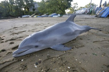 A Bayou La Batre, Ala., man has been charged in Mississippi with shooting a dolphin.