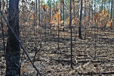A forest fire in southeast Jackson County had left scorched ground over some 400 acres by Friday afternoon.