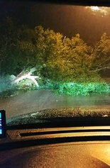 Tropical Storm Gordon struck Jackson County Tuesday night causing trees and other debris to fall, impeding roads. (Pascagoula Police Department)