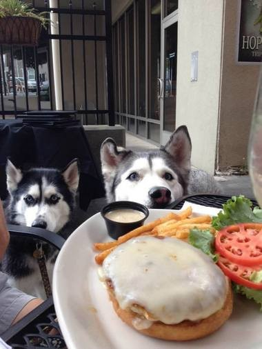 National Puppy Day: These local restaurants offer secret