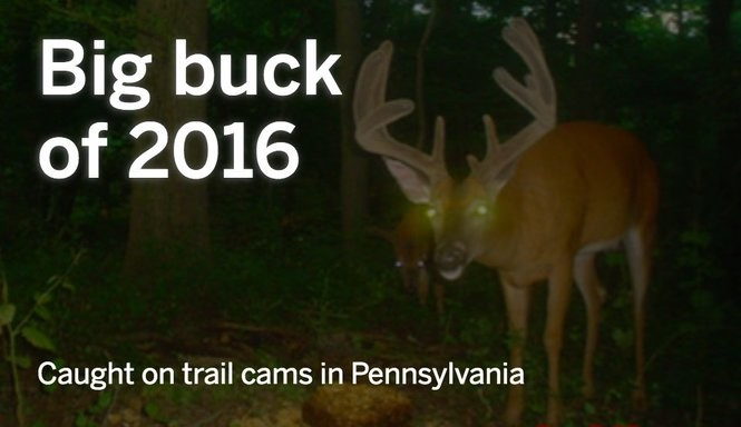 Caught on trail cams: Pennsylvania's big buck of 2016